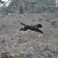 honden foto I believe I can fly