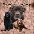 honden foto Collage van Yuna en Buddy (with thanks to judith!)