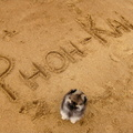 honden foto Phoh-Kai is the name!