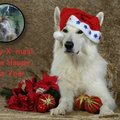 honden foto Merry X-Mas! and a Happy New Year