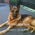 honden foto SHANTO WE LOVE YOU FOREVER!!!!