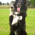honden foto  high five girl <3