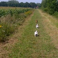 honden foto Follow the leader........