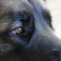 honden foto Close-up