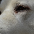 honden foto Close up Jego