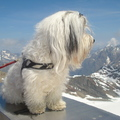 honden foto I'm on top op the world :-)