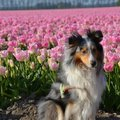 honden foto Yin-dee Abby Special Princess