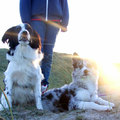 honden foto 25-12-2014, welcome back sunshine!
