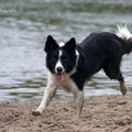 honden foto 25-04-2015, workshop Lianne
