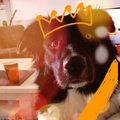 honden foto Happy kingsday ????????