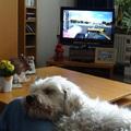 honden foto Wij kijken graag Formule 1.....