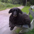honden foto Mungo just chilling in the park!